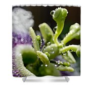 Drop Of Passion Shower Curtain by Priya Ghose