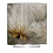 Dryas Octopetala Shower Curtain by Heiko Koehrer-Wagner