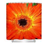 Dsc527d Shower Curtain by Kimberlie Gerner