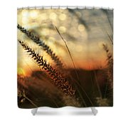 Dune Shower Curtain by Laura Fasulo