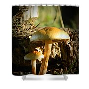 Duo Shower Curtain by Chalet Roome-Rigdon