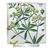 Dyers Madder Shower Curtain by French School