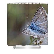 Eastern Baton Blue  Shower Curtain by Amos Dor