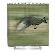 Eastern Grey Kangaroo Female Hopping Shower Curtain by Ingo Arndt