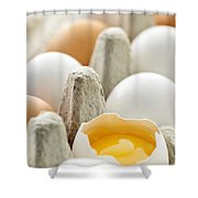Eggs In Box Shower Curtain by Elena Elisseeva