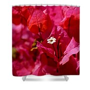 Electric Pink Bougainvillea Shower Curtain by Rona Black