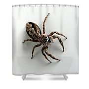 Elegant Jumping Spider Shower Curtain by Christina Rollo