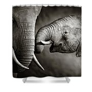Elephant Affection Shower Curtain by Johan Swanepoel