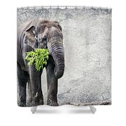 Elephant With A Snack Shower Curtain by Tom Gari Gallery-Three-Photography