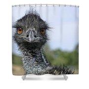 Emu Gaze Shower Curtain by Belinda Greb