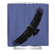 Endangered California Condor Shower Curtain by Ram Vasudev