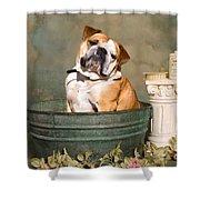 English Bulldog Portrait Shower Curtain by James BO  Insogna