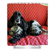 English Cocker Spaniel on Red Sofa Shower Curtain by Catherine Sherman