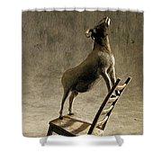 Equilibrium Shower Curtain by Cynthia Decker