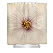 Evanescent Shower Curtain by John Edwards