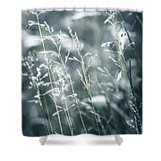 Evening Grass Flowering Shower Curtain by Elena Elisseeva