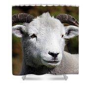 Exmoor Horn Sheep Shower Curtain by Terri  Waters