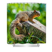Exploring Shower Curtain by Optical Playground By MP Ray