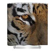 Eye Of The Tiger Shower Curtain by Ernie Echols