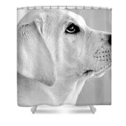Eye On The Ball Shower Curtain by Kristina Deane