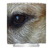 Eye See You Shower Curtain by Lisa Phillips