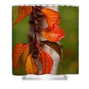 Fall Beauty Shower Curtain by Sharon Elliott