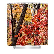 Fall In The Forest Shower Curtain by John Haldane