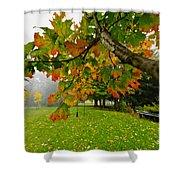 Fall Maple Tree In Foggy Park Shower Curtain by Elena Elisseeva