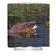 Family Affair Shower Curtain by Skip Willits