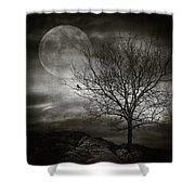 February Tree Shower Curtain by Taylan Soyturk