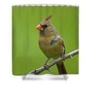 Female Cardinal Shower Curtain by Claudio Bacinello