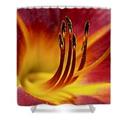 Fiery Lily Shower Curtain by Rona Black