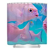 Fish Frenzy Shower Curtain by Carey Chen