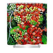 Flamboyant In Bloom Shower Curtain by Karin  Dawn Kelshall- Best