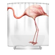 Flamingo Shower Curtain by Anonymous