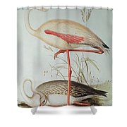 Flamingo Shower Curtain by Edward Lear