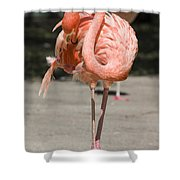 Flamingo Shower Curtain by Steven Ralser