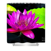 Floating Purple Water Lily Shower Curtain by Nick Zelinsky