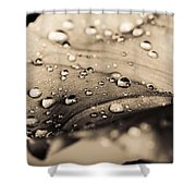 Floral Close-up IIi Shower Curtain by Marco Oliveira