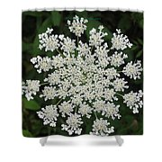 Floral Disc Shower Curtain by Sonali Gangane