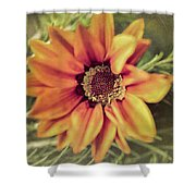 Flower Beauty I Shower Curtain by Marco Oliveira
