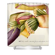 Flower Of The Banana Tree  Shower Curtain by Georg Dionysius Ehret