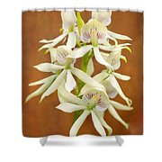 Flower - Orchid - A gift for you  Shower Curtain by Mike Savad