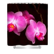 Flower - Orchid - Better In A Set Shower Curtain by Mike Savad