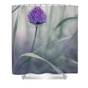Flowering Chive Shower Curtain by Priska Wettstein