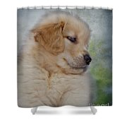 Fluffy Golden Puppy Shower Curtain by Susan Candelario
