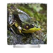 Fly Catcher Shower Curtain by Christina Rollo