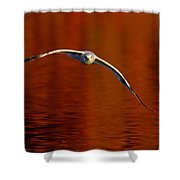 Flying Gull On Fall Color Shower Curtain by Robert Frederick