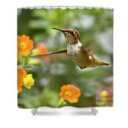Flying Scintillant Hummingbird Shower Curtain by Heiko Koehrer-Wagner