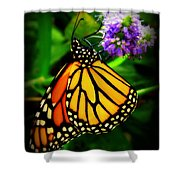 Food For Flight Shower Curtain by Lainie Wrightson